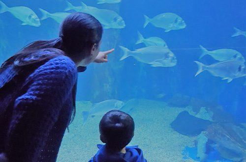 Acquario di Cala Gonone per bambini