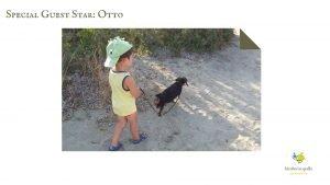 Costa Caddu spiaggia per cani Sardegna