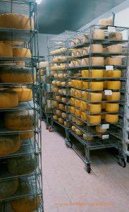 formaggio Greviera di Ozieri